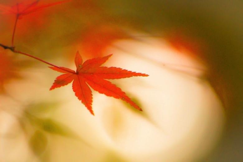 Kyoto autumn leaves1