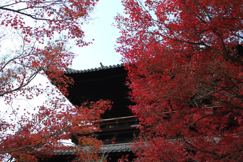 Kyoto autumn leaves3