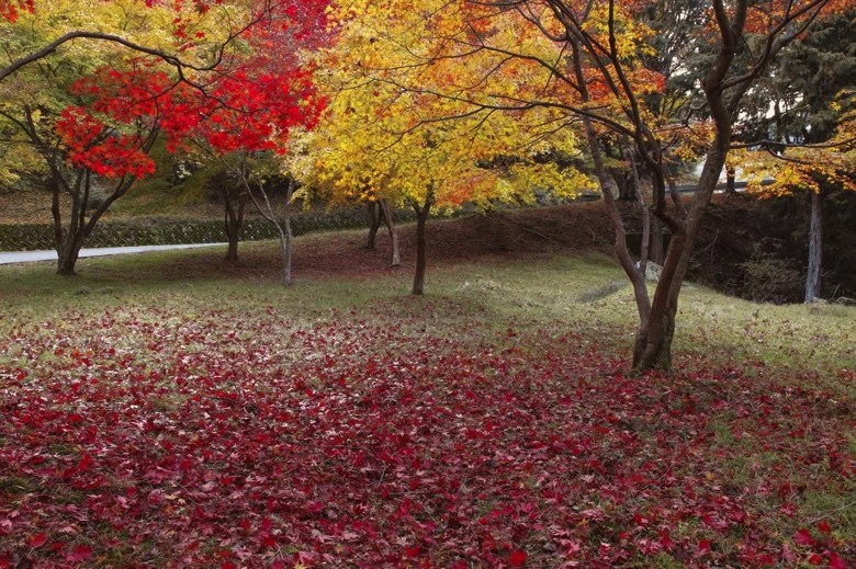 Shinjuku gyoen autumn leaves1