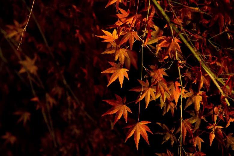 Autumn leaves in kanto4