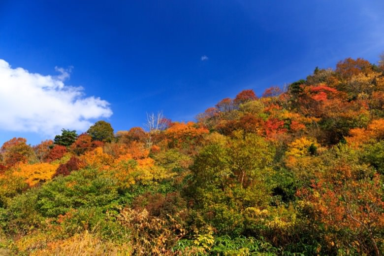 Autumn leaves in kanto5