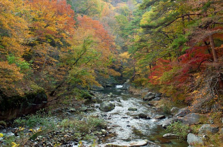 Autumn leaves in minoo2