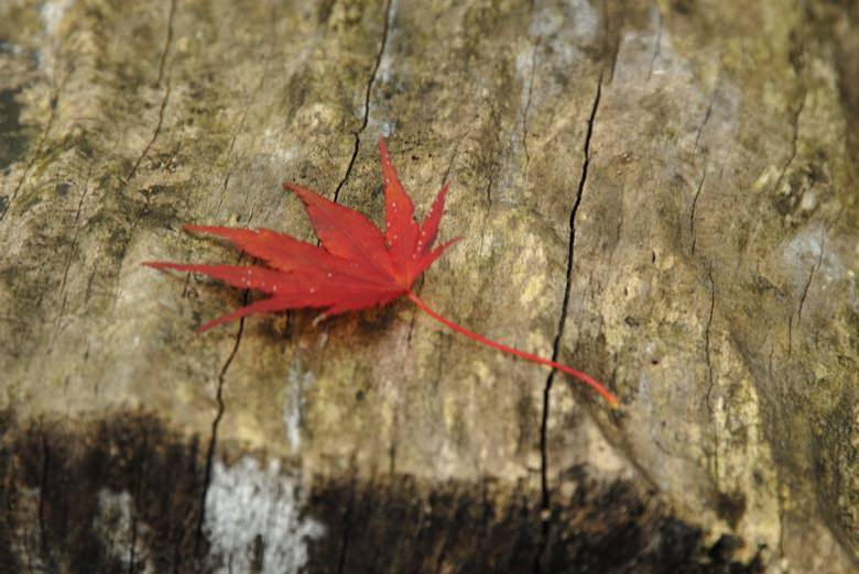 Autumn leaves in minoo3